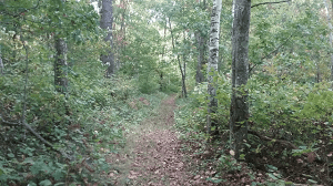 A footpath segment of the Ice Age Trail in Polk County Wisconsin