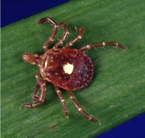 The Lonestar Tick - Does it cause meat eating allergies to those it bites?