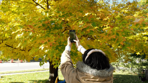 My wife taking pictures of leaves in Waupaca, Wisconsin... at her mother's house.