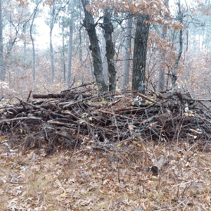I did manage to get into the woods a couple weeks ago to work on my deer blind for the Wisconsin gun deer season.