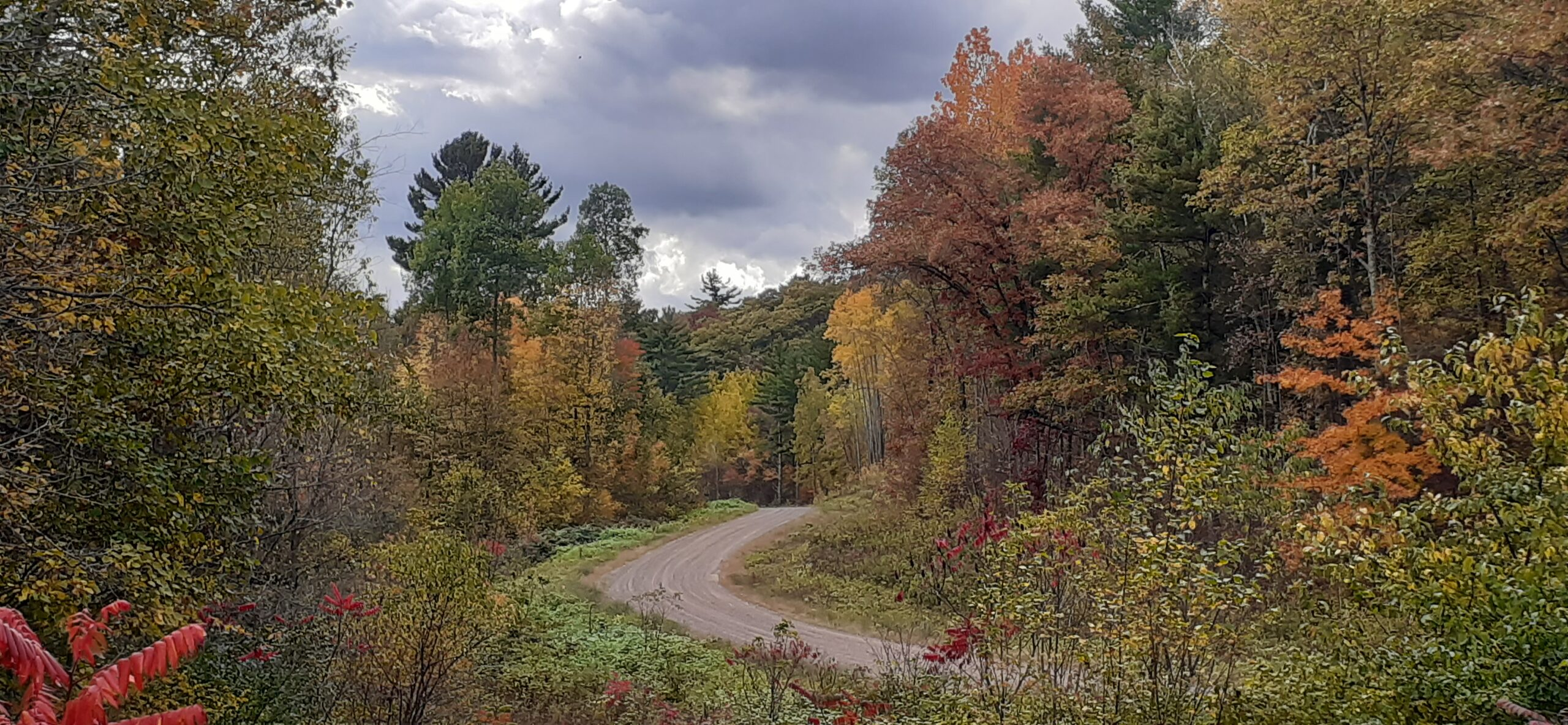 Exploring an unknown winding forest road, Autumn 2020 Northwest Wisconsin
