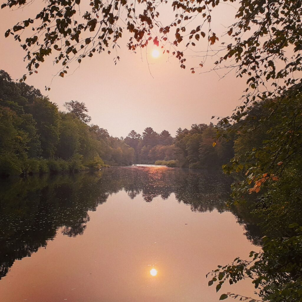 Sunrise view from my campsite in Black River State Forest, East Fork Primitive Campground
